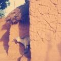 En Mole y Accra